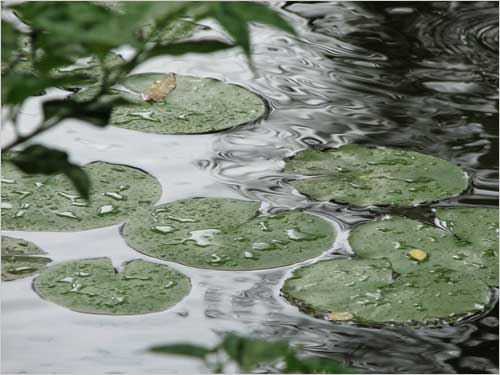 The droplets on the large leafs, makes a perfect float.
