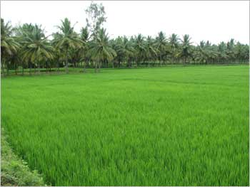 Lush green fields of Bangalore