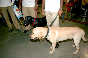 From left: Sniffer dogs Naughty and Rudra