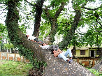 People take a nap under the shadows of trees during a hot day in Siliguri