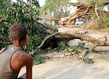 An uprooted tree blocks a road