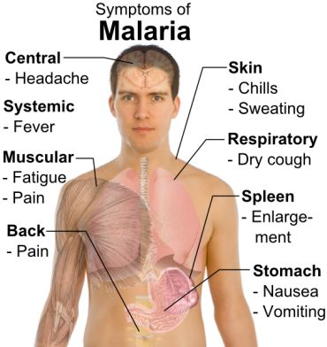 All that you need to know about Malaria