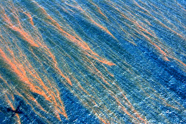 Oil is seen on the surface of the Gulf of Mexico