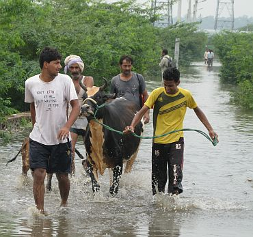 Villagers move their livestock to safety