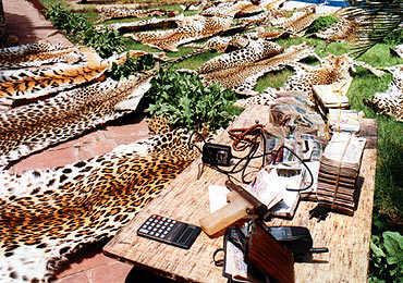 Confiscated items including leopard skins are on display at the police headquarters in Lucknow