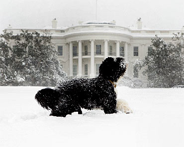 Bo, the Obama's family pet, plays in the snow during a blizzard on the south grounds of the White House