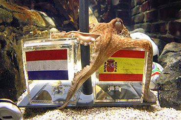 Paul, the 'Octopus Oracle' at the Sea Life aquarium in the western German city of Oberhausen