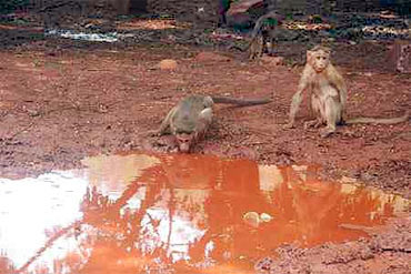 Monkeys near a pond in Bellary