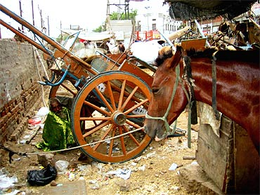 A 'tonga' lies in neglect near the Delhi railway station