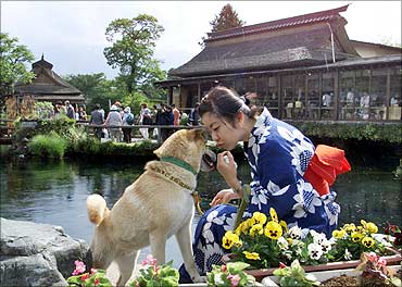 A young woman plays with her dog at a lake at Oshino village, at the foot of Mount Fuji, Japan