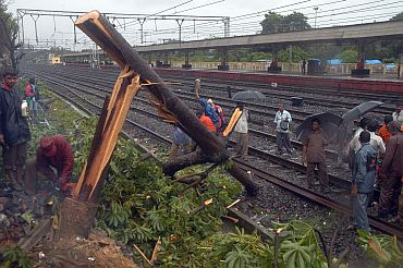 This tree collapsed on the Dadar-Matunga rail route on Wednesday morning, temporarily affecting rail traffic