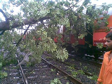 A tree collapsed on the Dadar-Matunga rail route on Wednesday morning, temporarily affecting rail traffic