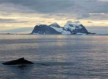 A humpback whale swims past the British Antarctic Survey's Rothera base