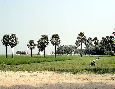 A rice field in Saran district