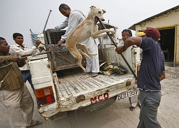 Around 473 strays were picked up from various parts of the city before the Games