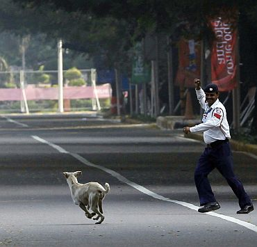 File photo shows a traffic official chasing a stray dog off the marathon course during the men's and women's marathon final at the Commonwealth Games