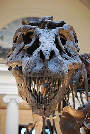 Dreaded T-Rex was a cannibal
