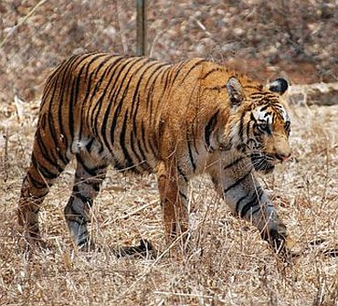 The shocking case of Orissa's dwindling wildlife