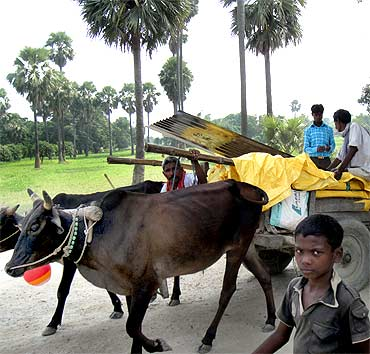 A bullock cart on the road to Karinga on a Sunday afternoon
