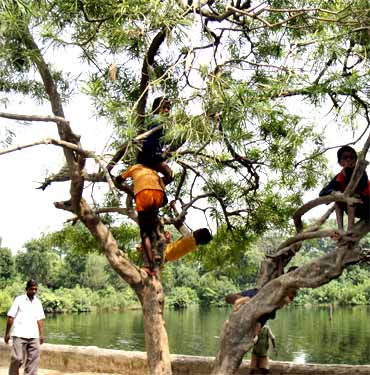 Children play on a tree beside a pond in Karinga village