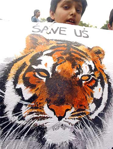 A schoolboy raises his voice against tiger poaching in New Delhi