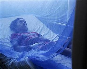 Dengue fever: What you MUST know