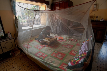 A young girl reads under her malaria net in West Bengal
