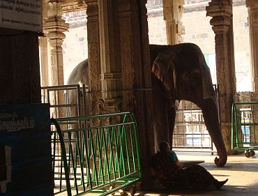 A temple elephant at the Ranganathaswamy temple in Srirangam
