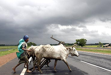 A farmer and his bullocks cross a highway against the backdrop of monsoon clouds in Singur