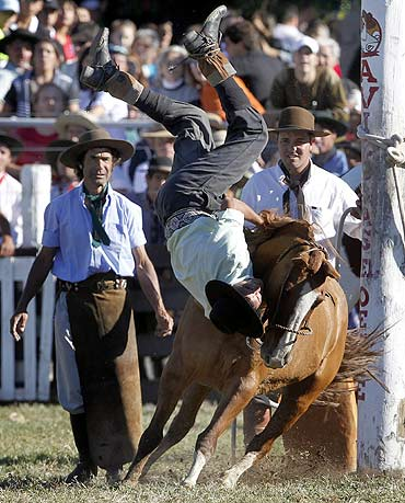 A gaucho is unseated by an untamed or unbroken horse during the event
