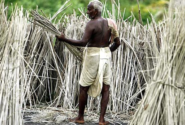 A jute farmer from Singur