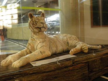 A tiger sculpture by Antonia E Costa at the India Habitat Centre in Delhi