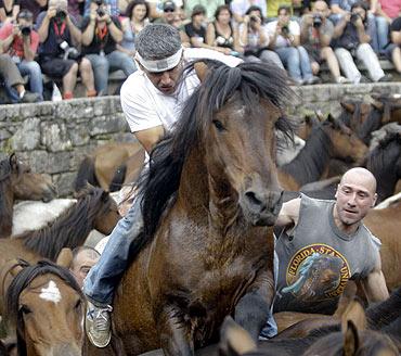 Horse wrestling in Spain