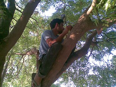 A villager atop a tree, trying to get a glimpse of Rahul Gandhi