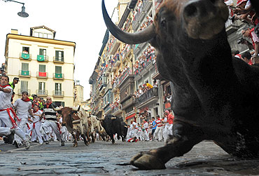 A fighting bull falls during the second day of the running of the bulls