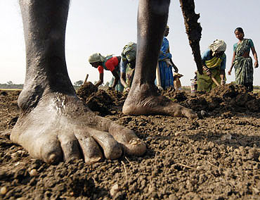 A file photo of people working in a field under the NREGA programme