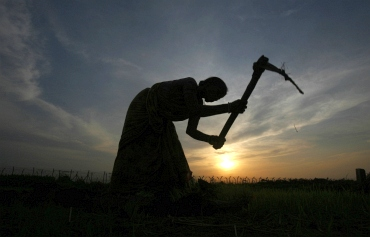 A farmer working in a paddy field is silhouetted against the setting sun on the outskirts of Agartala