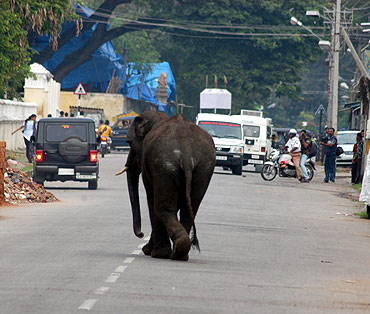 Elephants go on a rampage in Mysore