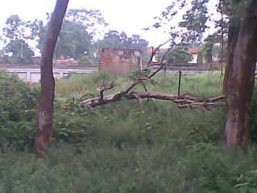 The tree at the police station compound where Sonam's body was found hanging