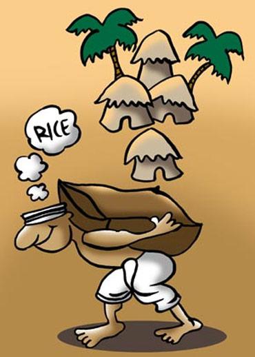 The burden of rice