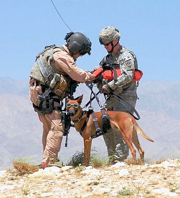 Dog was equipped with protective body armour