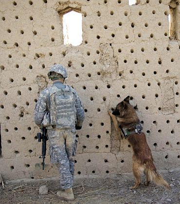 Dog on Osama mission was there to detect explosives