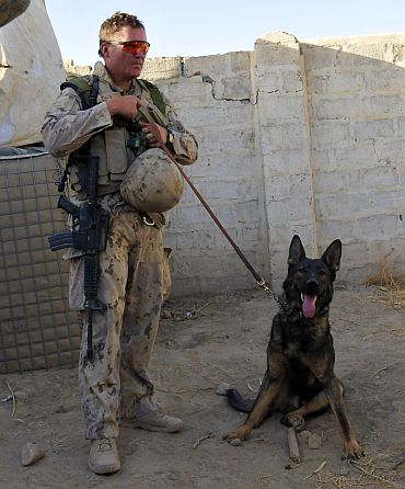 US Army has an estimated 2,800 dogs