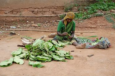 Gathering tendu leaves, used to make beedis, is a source of livelihood for villagers