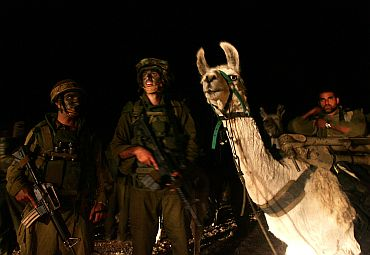 Israeli special forces with their llamas wait to cross the Israel-Lebanon border