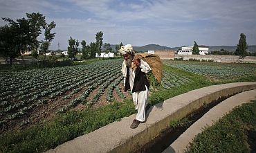 Farmer Jalaluddin carries harvested vegetables past the compound