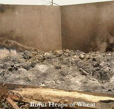 Burnt heaps of wheat