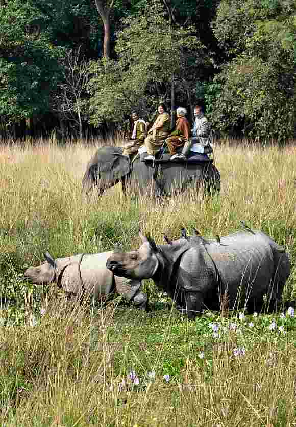 Visitors enjoying an elephant safari at Pobitora