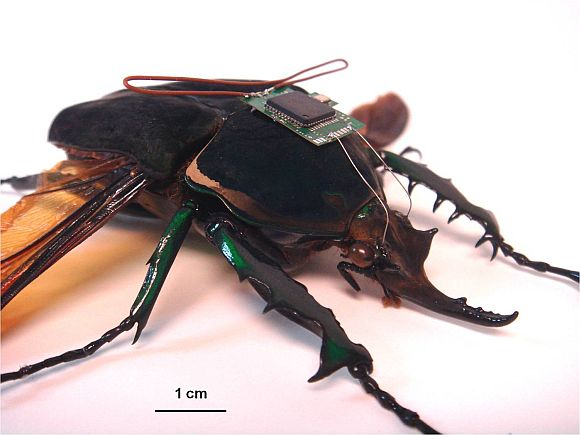 A HI-MEMS enabled insect