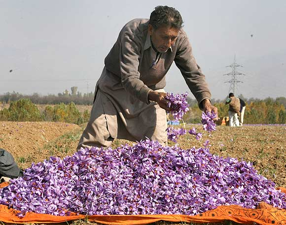 World's best saffron is found in Kashmir